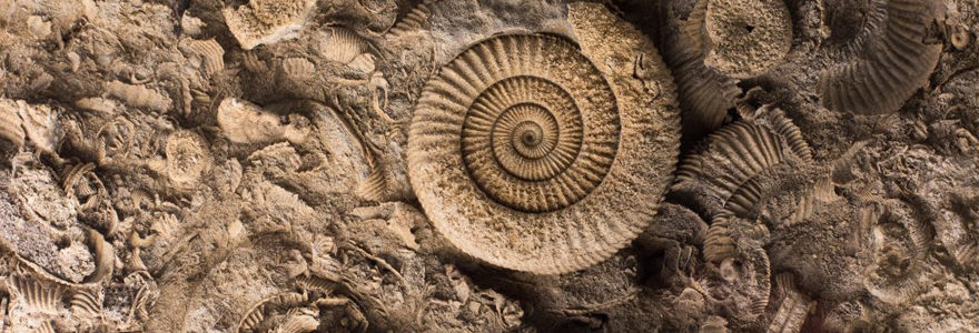 pierre Ammonite